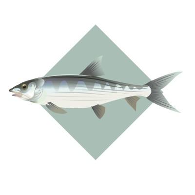 Bonefish 2